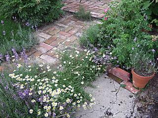 Gardengonewild 005