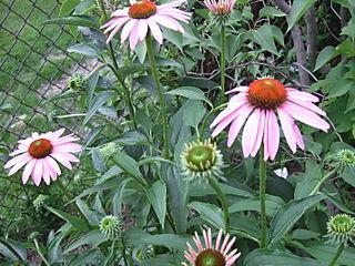 Gardengonewild 010